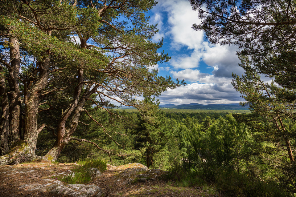 Cairngorm-page-gallery-image-1